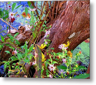 Wildflowers On A Cypress Knee Metal Print by Barbara Bowen
