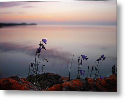 Metal Print featuring the photograph Wildflowers Over Lake Superior by Jane Melgaard