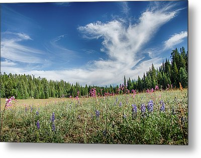 Wildflowers Reach For The Sky Metal Print