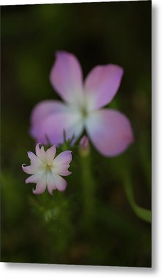 Metal Print featuring the photograph Wildflowers by Roger Mullenhour