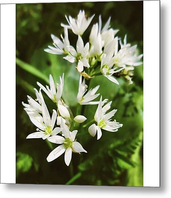 #wildgarlic #flower #woodland #walks Metal Print by Natalie Anne