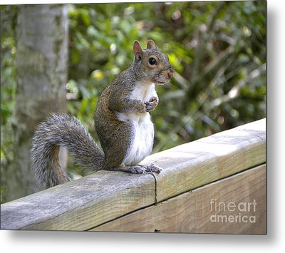 Metal Print featuring the photograph Will Pose For Peanuts by Terri Mills