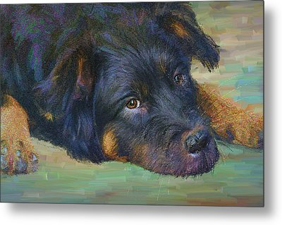 Will You Play With Me? Metal Print by Angela A Stanton