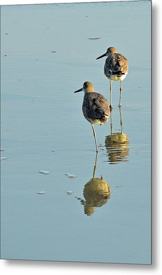 Willets On Jekyll Metal Print by Bruce Gourley