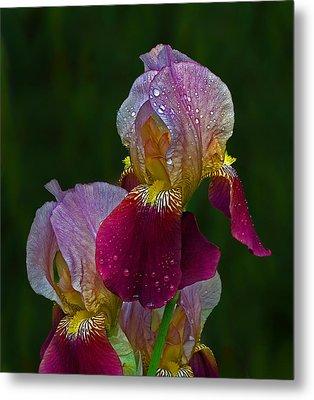 Willowwood Iris Metal Print by Robert Pilkington