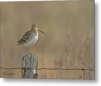 Wilson's Snipe On A Post Metal Print by CR Courson