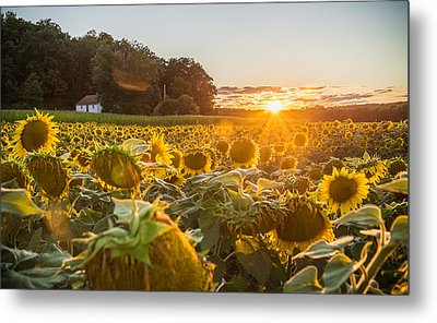 Wilted Sunset Metal Print