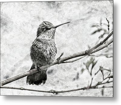 Metal Print featuring the photograph Wind In Her Feathers by Angie Vogel