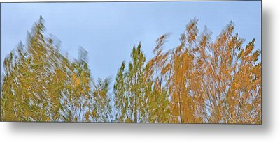 Wind In The Trees - Signed Limited Edition Metal Print by Steve Ohlsen