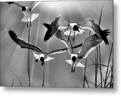 Metal Print featuring the photograph Wind Swept Bw by Jan Amiss Photography