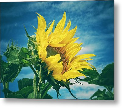 Metal Print featuring the photograph Windblown  by Karen Stahlros