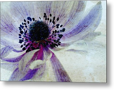 Windflower Metal Print by AugenWerk Susann Serfezi