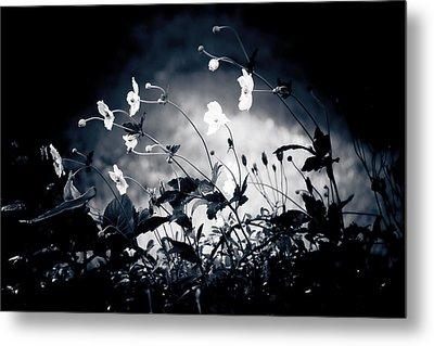 Windflowers  Metal Print by Maggie Terlecki