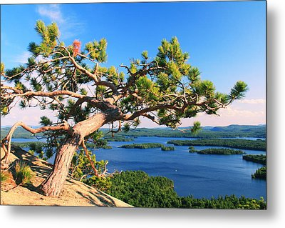 Windswept Pine On Rattlesnake Mountain Metal Print by Roupen  Baker