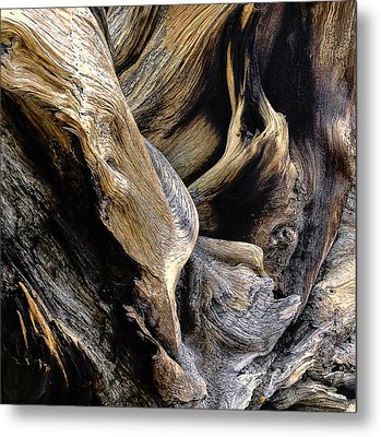 Windswept Roots Metal Print by The Forests Edge Photography - Diane Sandoval
