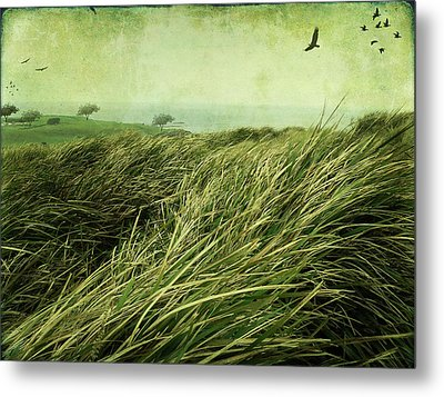 Metal Print featuring the digital art Windy Day On The Nut by Margaret Hormann Bfa