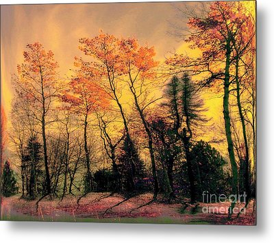 Metal Print featuring the photograph Windy  by Elfriede Fulda