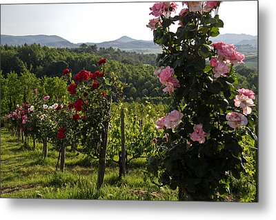 Wine And Roses Metal Print by Roger Mullenhour