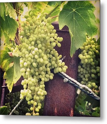 #wine On The #vine . Love These Little Metal Print by Shari Warren