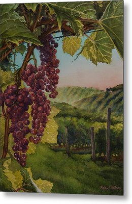 Wine Vineyard Metal Print by Heidi E  Nelson