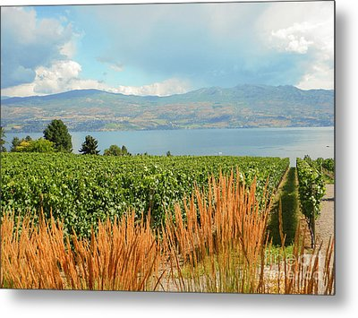 Winery In Canada Metal Print