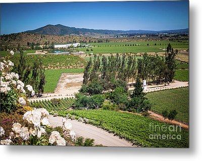 Vineyard View With Roses, Winery In Casablanca, Chile Metal Print by Anna Soelberg