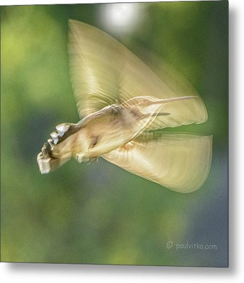 Wing Shadow Metal Print