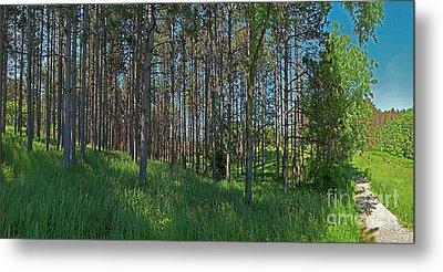 Wingate Prairie Veteran Acres Park Pines Crystal Lake Il Metal Print