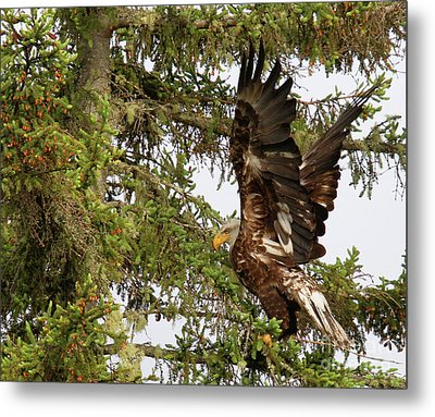 Metal Print featuring the photograph Winging-it Up The Tree 1 by Debbie Stahre