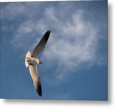 Wings Metal Print by Don Spenner
