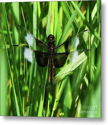 Metal Print featuring the photograph Wings Of Note by Deborah Johnson
