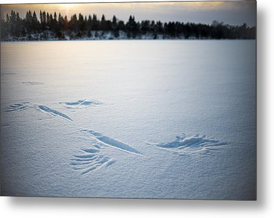 Wings On The Mississippi Near Rice Mn Metal Print