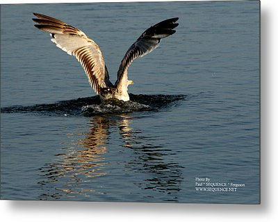 Metal Print featuring the photograph Wings On The Sea by Paul SEQUENCE Ferguson             sequence dot net