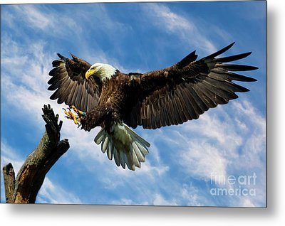Wings Outstretched Metal Print