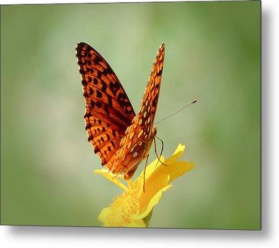 Wings Up - Butterfly Metal Print