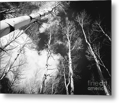 Metal Print featuring the photograph Winter Aspens by The Forests Edge Photography - Diane Sandoval