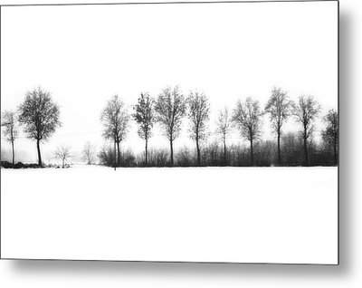 Winter Bareness Metal Print by Silvia Ganora