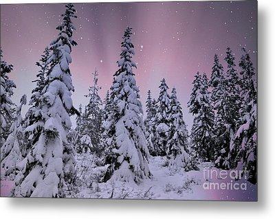 Winter Beauty Metal Print by Sheila Ping