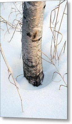 Winter Birch Metal Print by Bill Morgenstern