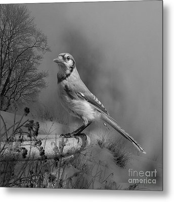 Winter Bird Metal Print by Jan Piller