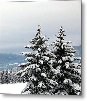 Metal Print featuring the photograph Winter Bliss by Will Borden