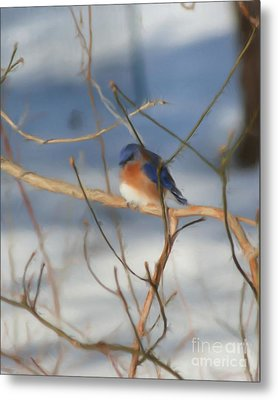 Metal Print featuring the painting Winter Bluebird Art by Smilin Eyes  Treasures