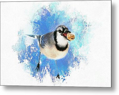 Metal Print featuring the photograph Winter Bluejay by Darren Fisher