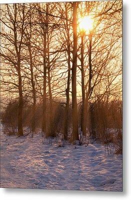 Winter Break Metal Print by Wim Lanclus
