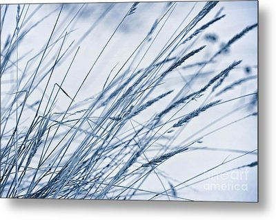 Winter Breeze Metal Print by Priska Wettstein