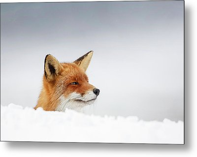 Winter Came - Red Fox In The Snow Metal Print