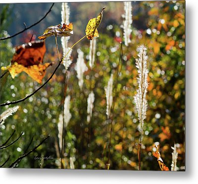 Metal Print featuring the photograph Winter Color by George Randy Bass