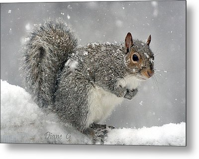 Winter Metal Print by Diane Giurco