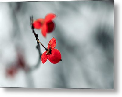 Winter Flower Metal Print by Todd Klassy