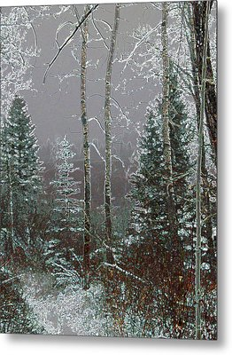 Winter Fog Metal Print by Stuart Turnbull